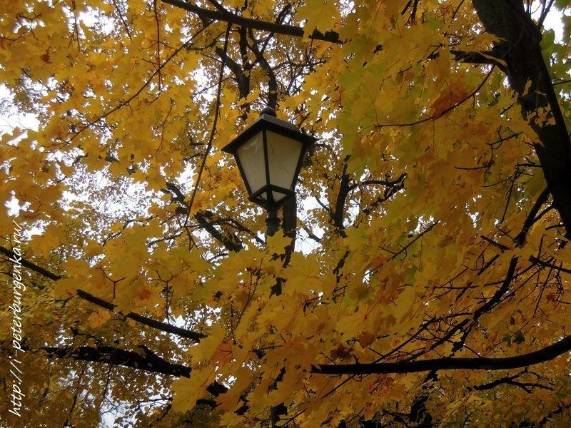 Осень. Клен. Фонарь